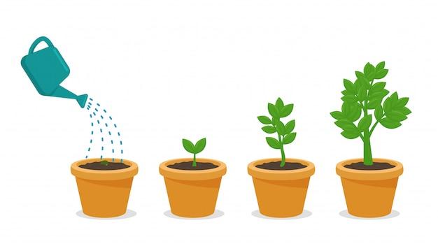 Sementes que recebem água e solo completos estão crescendo em uma planta em vaso.