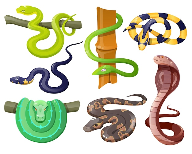 Serpentes selvagens tropicais isoladas em branco