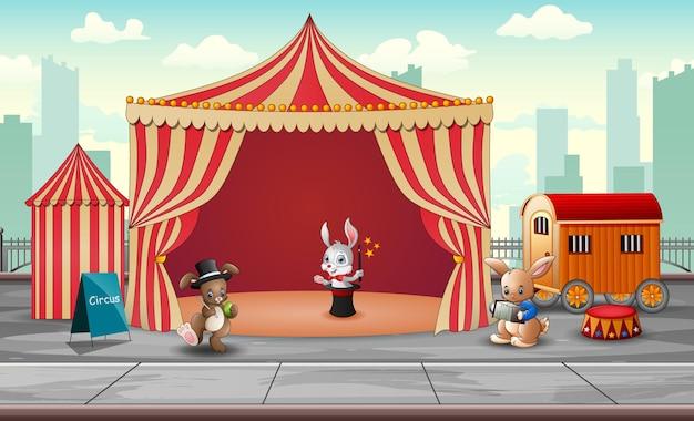 Show de animais de circo e performance de acrobata na arena