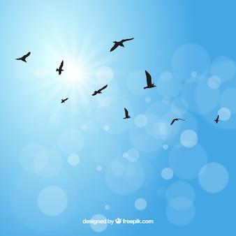 Silhouette voando pássaro fundo