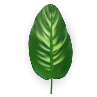 Silhueta de folha de palmeira linda