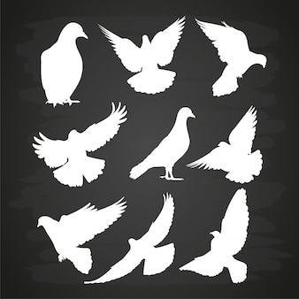 Silhueta de pomba branca definida no quadro-negro