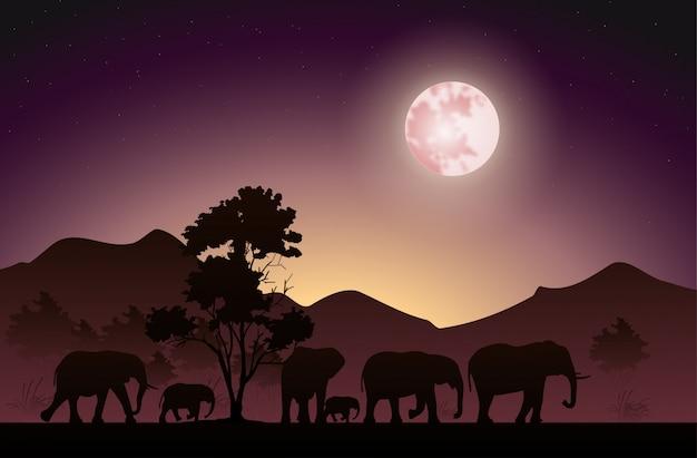 Silhueta dos elefantes que andam à noite