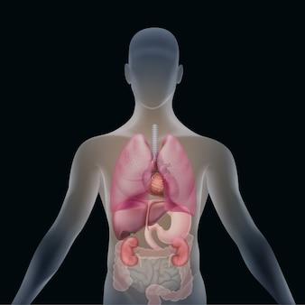 Silhueta humana transparente com órgãos: fígado, baço, coração, estômago, rins, pulmões e intestinos, vista frontal isolada no fundo preto