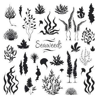 Silhuetas de algas marinhas. recife de coral subaquático, planta de algas marinhas desenhada à mão, ervas marinhas ao ar livre, oceano