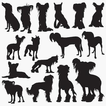 Silhuetas de cão de crista chinês