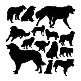 Silhuetas de cão de montanha estrela