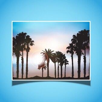 Silhuetas de palmeiras contra um céu sol de verão