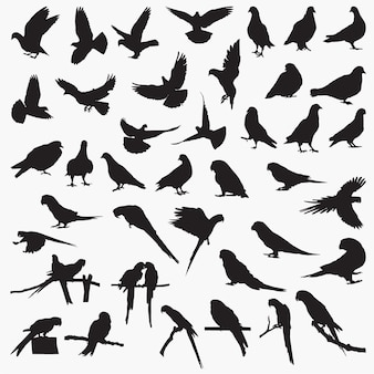 Silhuetas de papagaio pombo