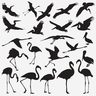 Silhuetas de pelicano flamingo