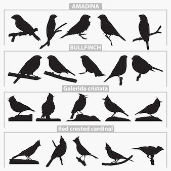 Silhuetas de raças de pássaros