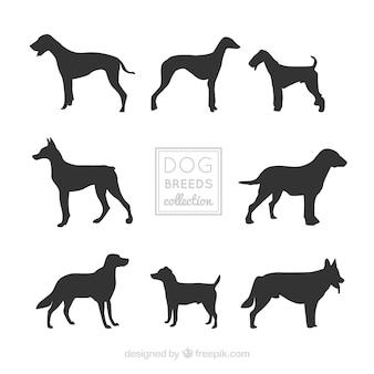 Silhuetas decorativas do cão de raças diferentes