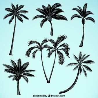 Silhuetas, palma, árvores