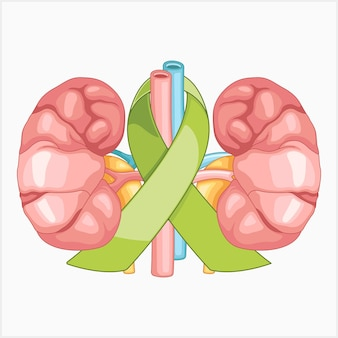 Símbolos para ilustração vetorial de consciência renal