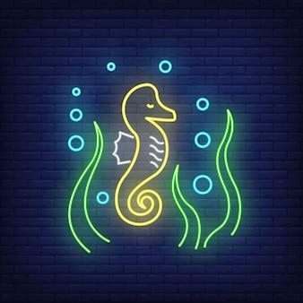 Sinal de néon de cavalos-marinhos. cavalos-marinhos, algas e bolhas. elementos de banner ou outdoor a brilhar.