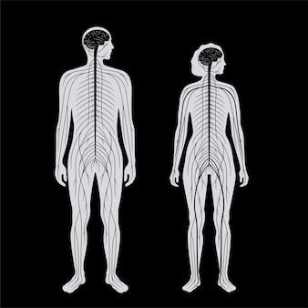 Sistema nervoso central. os nervos enviam sinais elétricos de e para o cérebro e a medula espinhal no corpo masculino e feminino. conceito de cns e pns. ilustração vetorial plana de raio-x de pôster médico para clínica de neurologia