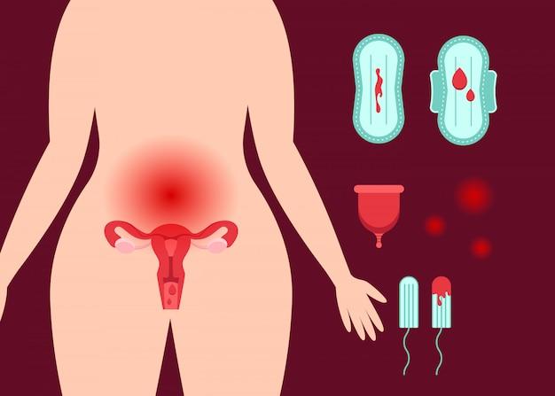 Sistema reprodutivo feminino.