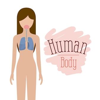 Sistema respiratório corpo humano