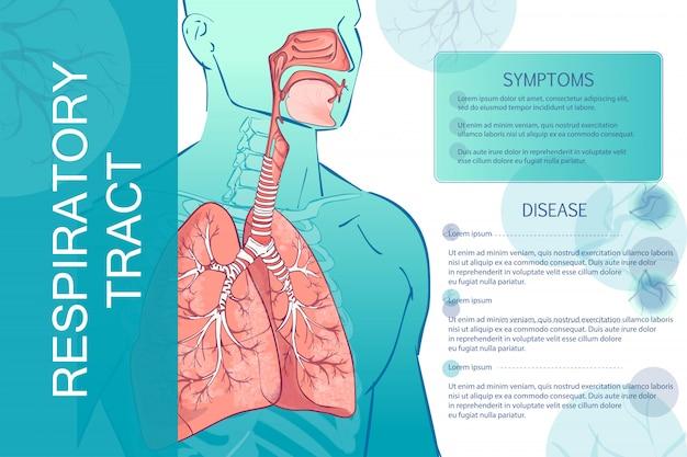 Sistema respiratório humano de vetor