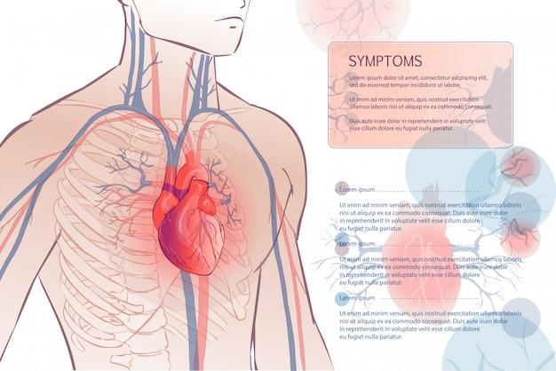 Sistema vascular circulatório humano
