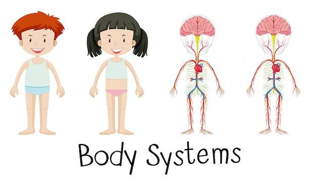 Sistemas do corpo de menino e menina