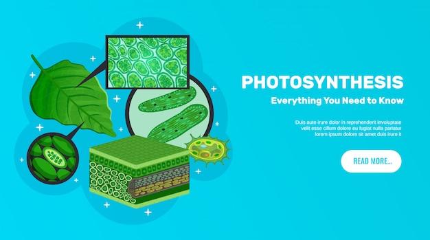 Site de informações básicas de fotossíntese banner horizontal design com folhas verdes células cloroplastos estrutura clorofila