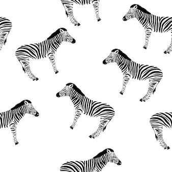 Sketch seamless pattern com zebra selvagem