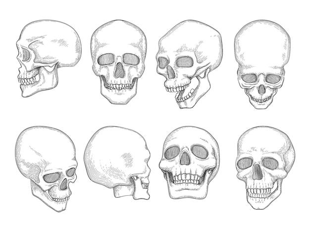 Skulls. ossos da anatomia humana, cabeça, crânio, boca e olhos