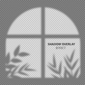 Sobreposição de sombra da janela e folhas no fundo transparente