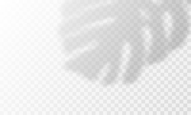 Sobreposição de sombra na palma da mão. sobreposição de folhas de palmeira transparente