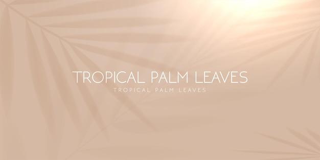 Sombra de folha de palmeira tropical em fundo pastel claro. ilustração vetorial.
