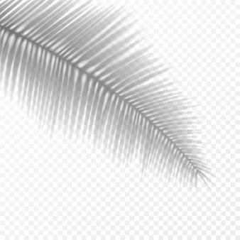 Sombra em folha de palmeira transparente realista