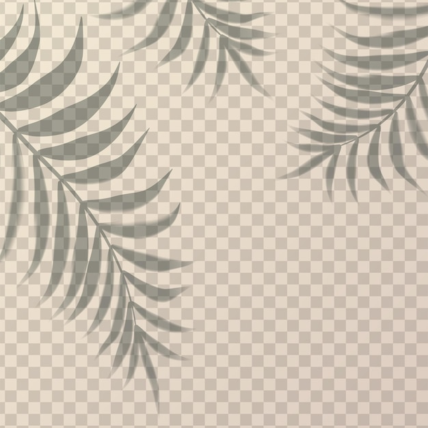 Sombra realista com três ramos de palmeira