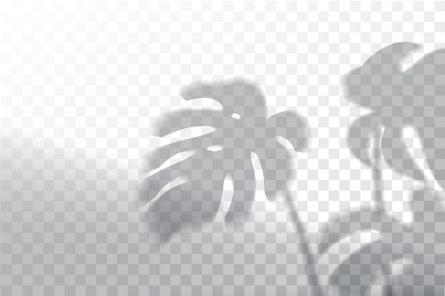 Sombra, simulação de efeitos de sobreposição, moldura de janela e folha de plantas