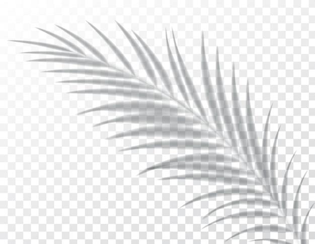 Sombras, efeitos de sobreposição, folha de palmeira planta, luz interior natural, ilustração.