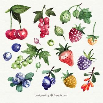Sortido, aquarela, pedaços, fruta