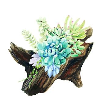 Suculentas aquarela brilhantes, crescendo no pote de madeira