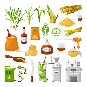 Superalimento de cana-de-açúcar isolado no conjunto branco. caule com folhas e açúcar granulado, planta doce ecológica, garrafa de rum bio. produção da fabricação de glicose na cana-de-açúcar.