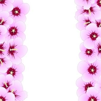 Syriacus do hibiscus - rosa da beira de sharon.