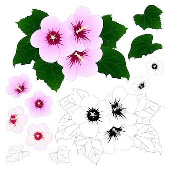 Syriacus do hibiscus - rosa de esboço de sharon