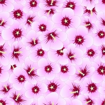 Syriacus do hibiscus - rosa do fundo sem emenda de sharon.