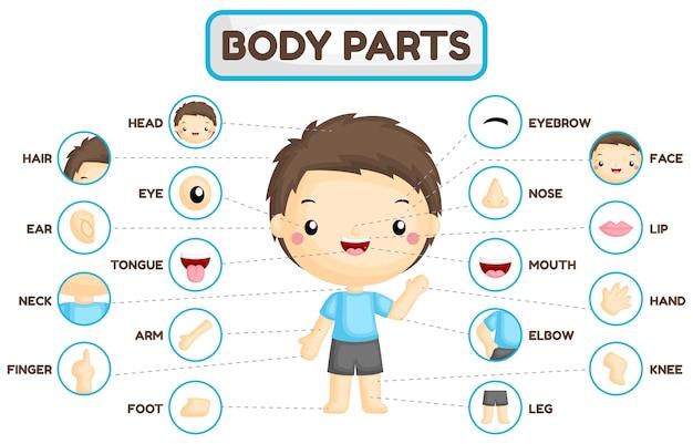 Tabela de partes corporais de meninos