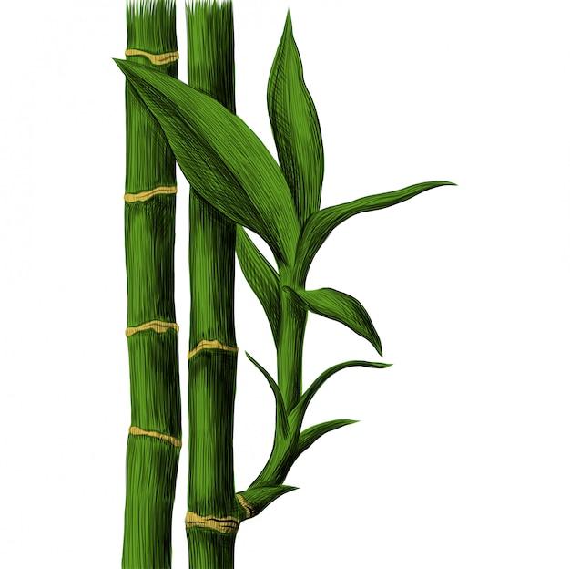Talo de bambu e folhas