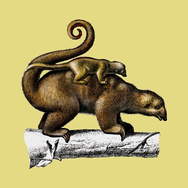 Tamanduá-pigmeu (cyclopes didactylus) ilustrado por charles dessalines d orbigny