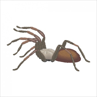 Tarântula de aranha na caça