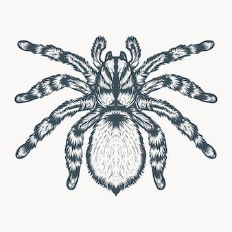 Tarântula mão ilustrações desenhadas