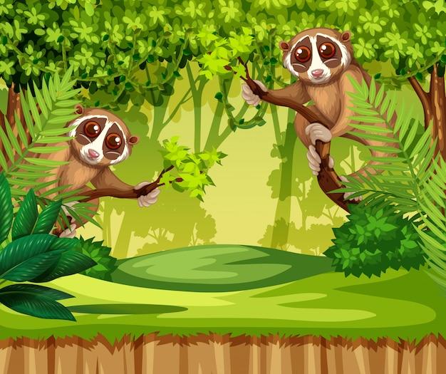 Tarsier vivendo na selva