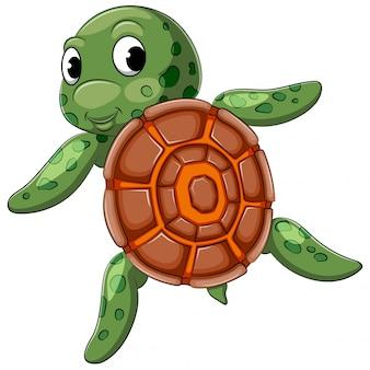 Tartaruga bonita nadando com boa posando