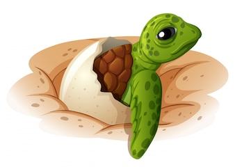 Tartaruga de bebê saindo de casca