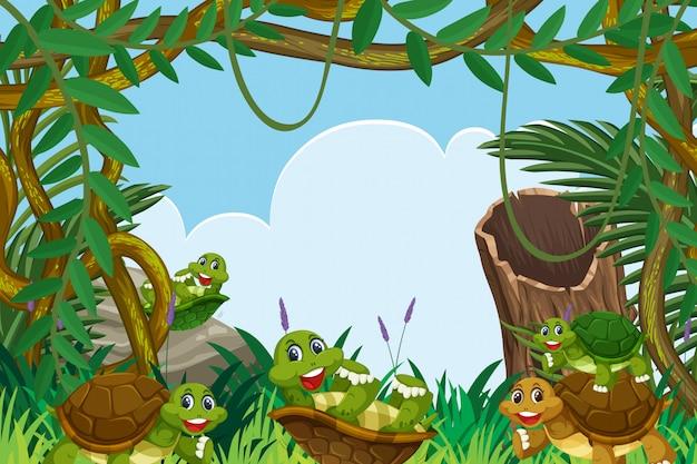 Tartaruga na cena da selva